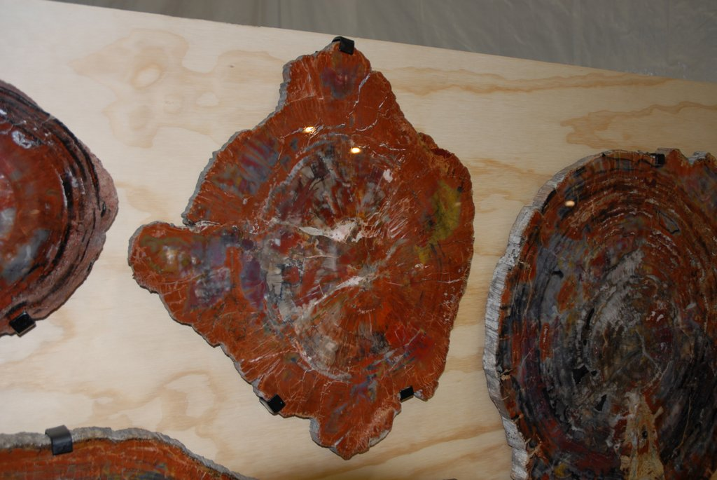 petrified_wood_6