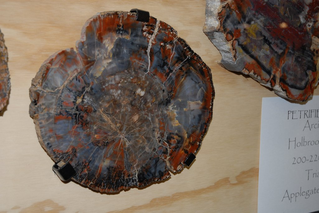 petrified_wood_9