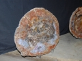 petrified_wood_4